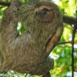23 Costa Rica Wildlife Photos to Make You Want to Visit Right Now