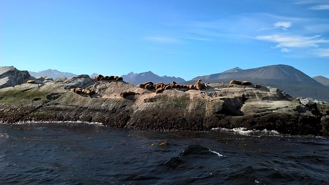 Things to do in Ushuaia Beagle Channel Patagonia