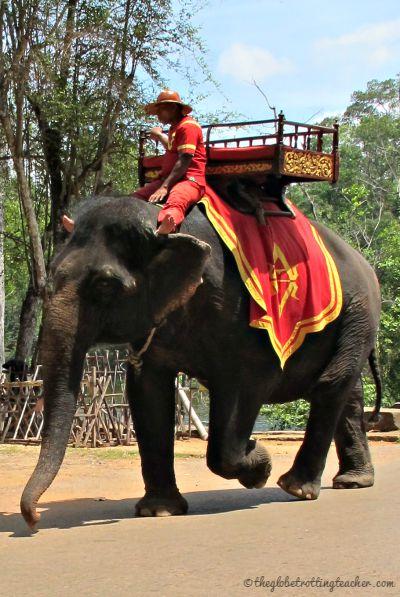 Trekking Elephant in Cambodia