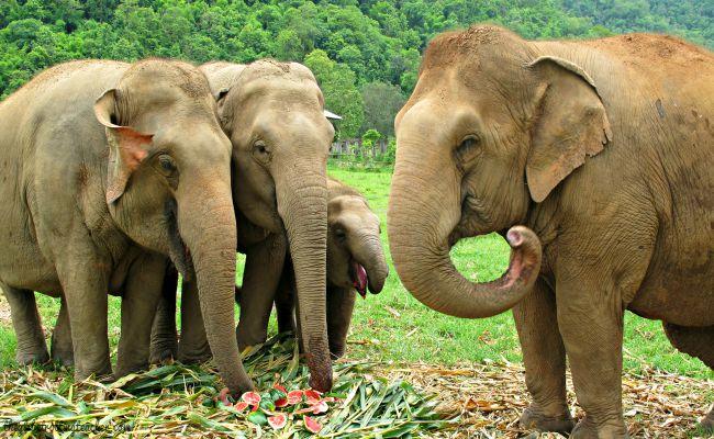 Elephants eating at ENP