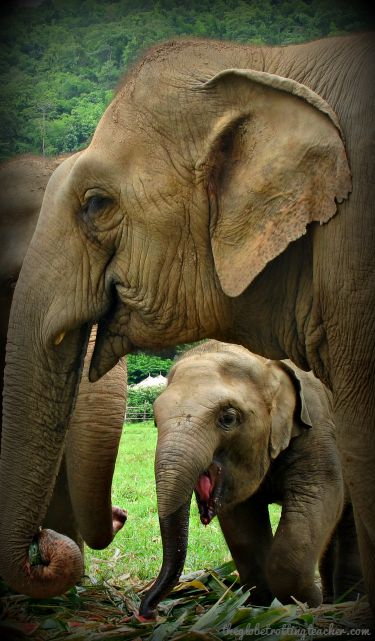 Elephants at ENP