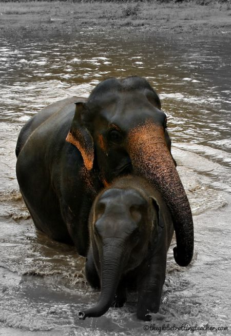 Elephant Mom and Baby at ENP