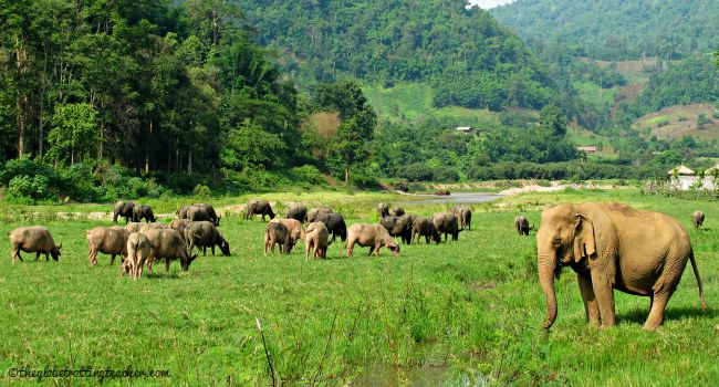 Water buffalo and Elephant at ENP