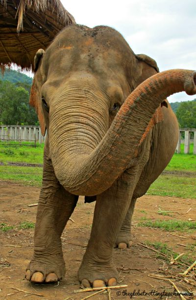 Elephant at ENP