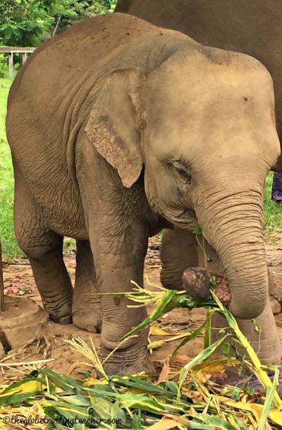 Elephant Baby at ENP