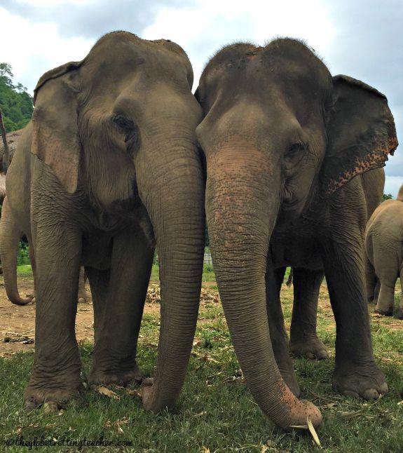 Elephant love at ENP