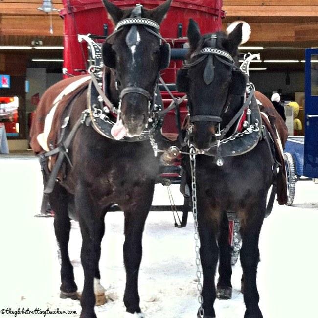 Zermatt Switzerland Horses