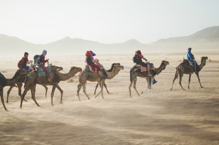Group Tour Stock, Desert