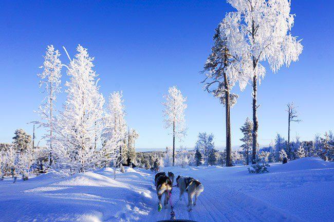 Dog Sledding in Finnish Lapland