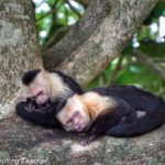 How to Spend a Fantastic Day in Manuel Antonio National Park