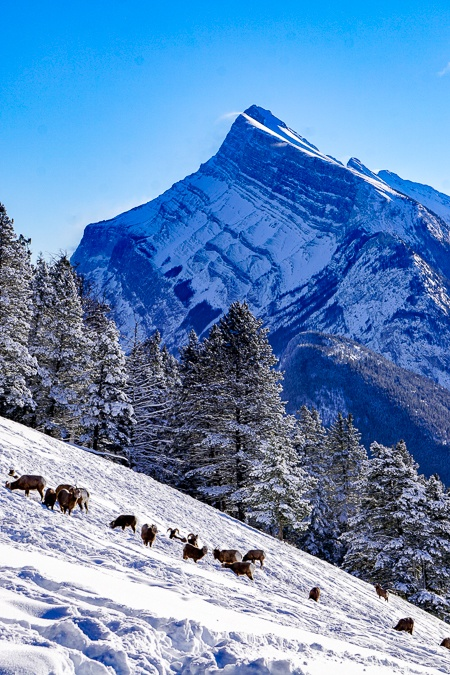 Banff National Park Wildlife