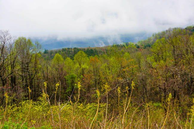 mountain bike in Virginia's Blue Ridge