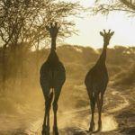 Intrepid Travel Review: Africa Safari on the Okavango Experience Tour