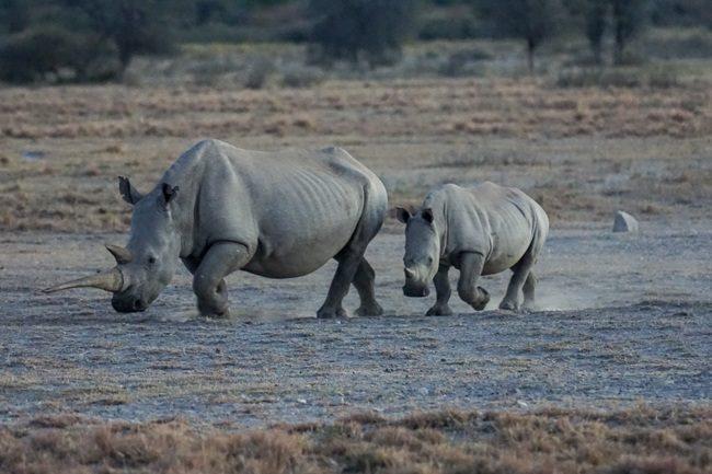 Intrepid Travel Review Botswana Khama Rhino Santuary