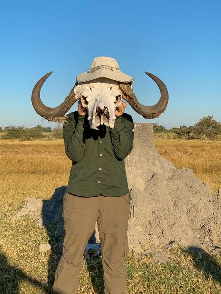 okavango delta buffalo skull