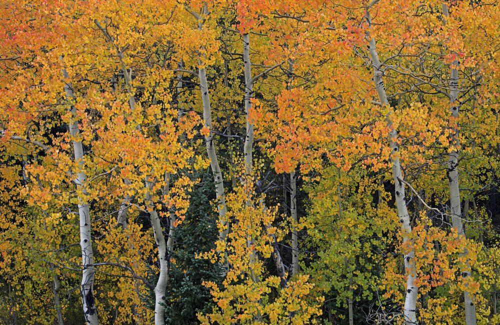Peak to Peak Scenic Byway Estes Park Colorado